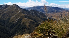 Spanish Speargrass, tussock, and Ben Lomond