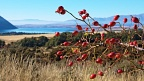 Rosehips and Lake Ohau
