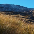 Tussock in Freehold Creek valley