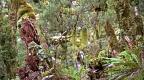 Rain forest nook