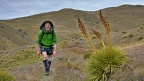 Spanish Speargrass by tramping track