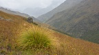 Tussock in misty Roaring Meg Valley