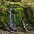 Small mossy waterfall