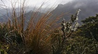 Tussock and shrubs