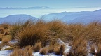 Golden tussock above Clutha Valley
