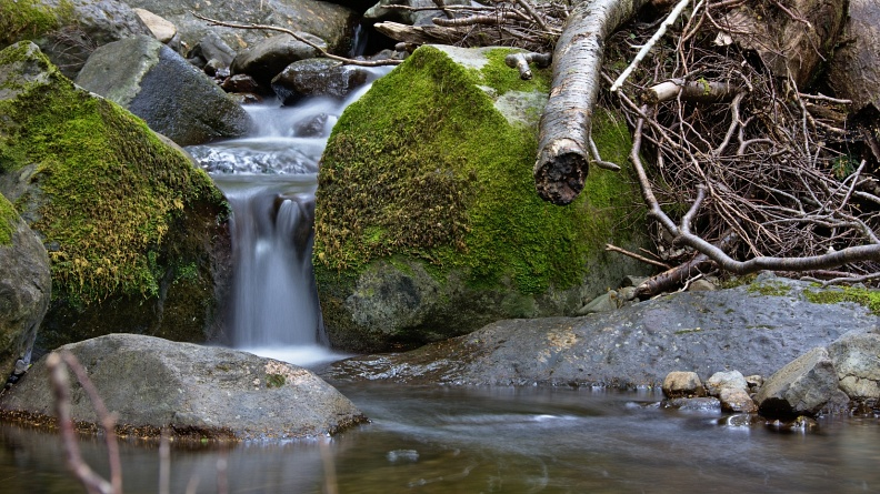 Little stream in beech forest