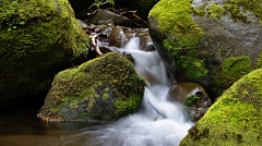 Little stream and mossy rocks