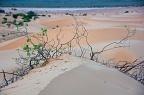 Dunes composition
