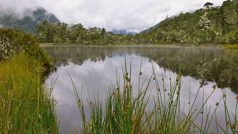Tarn at Lewis Pass on a rainy day