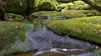 Stream and mossy boulders