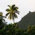 Coconut palms and hills