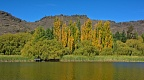 Yellow poplars at Butchers Dam