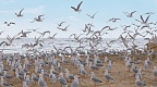 Terns and sea gulls colony