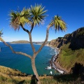 Cabbage tree and Otago coastline