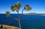 Cabbage tree, Aramoana Mole, and Tairoa Head
