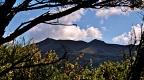 Silver Peaks skyline through manuka bush
