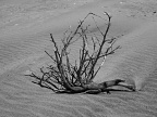 Dead tree branch in the sand