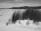 Tussock and the beach