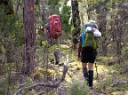Tramping along marked track