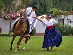 Marinera dance with Peruvian Paso horse