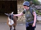 Petting llama