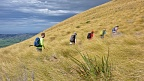 Trampers in golden tussock above Taieri Plains