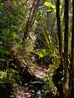 Lovely bushwalk