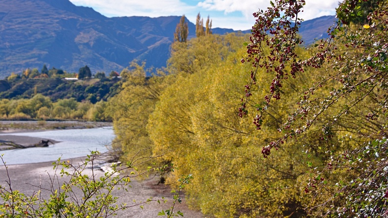 Hawthorn by Shotover River