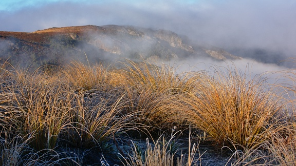 Golden tussock and fog above Woolshed Creek gorge