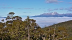 Beech forest and Mt Titiroa above sea of clouds