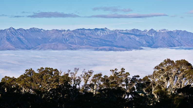 Beech forest and Takitimu Mountains above see of clouds