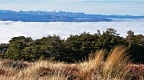 Tussock and beech forest above sea of clouds