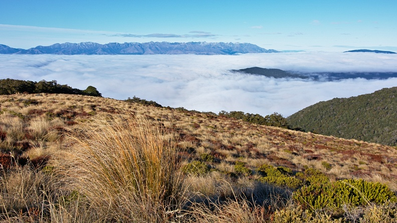 Above bushline and above sea of clouds