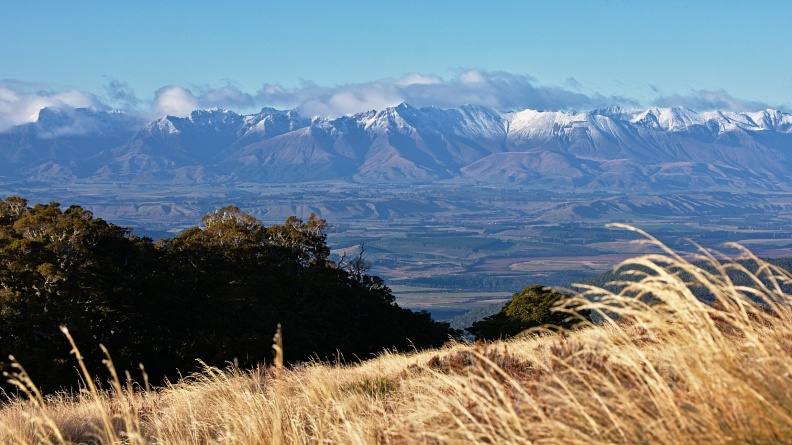 Tussock, beech forest, and Takitimu Mountains