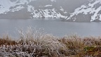 Frozen tussock and Lake Harris