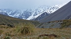 Tussock and snowy peaks in clouds