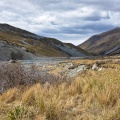 River flats with tussock and matagouri