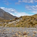 Pile of scree with tussock growing on it