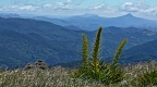 Flowering Spanish Speargrass and distant mountains