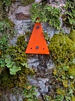 Orange track marker on a mossy tree