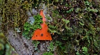 Orange track marker disappearing behind mosses and lichens