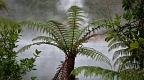 Tree fern and Frying Pan Lake