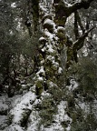 Snow in beech forest